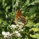 silver-washed-frit-under