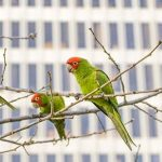 parrots and a tower block